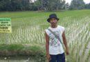 Ketua Kelompok Tani Subur Sarman